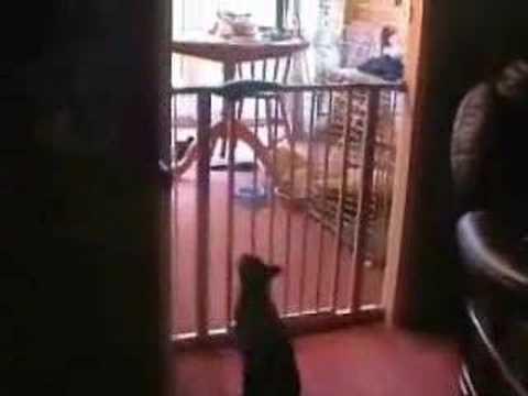 Cat Fence Youtube