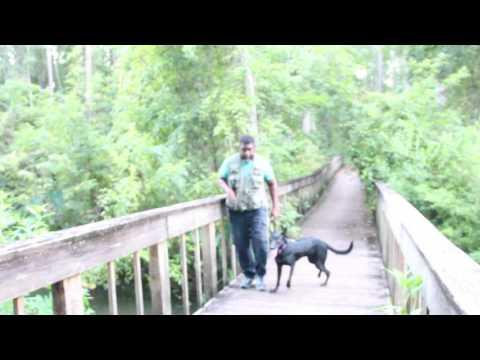 Vanguard k9; Puppy obedience control training