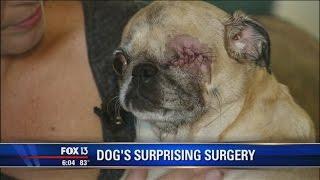 Vets remove dog