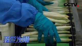 《我爱发明》 20200701 芦笋巧去皮|CCTV农业