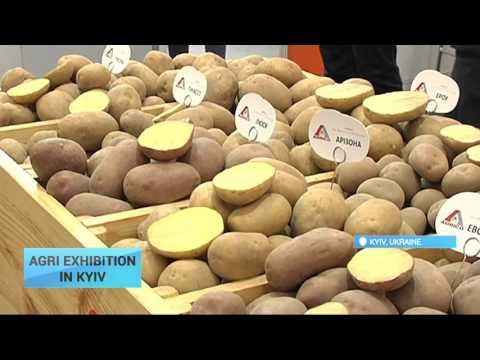 Agri Exhibition in Kyiv: Annual International exhibition Grain Tech Expo 2016