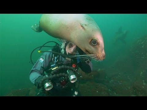 Introducing Salish Sea Wild