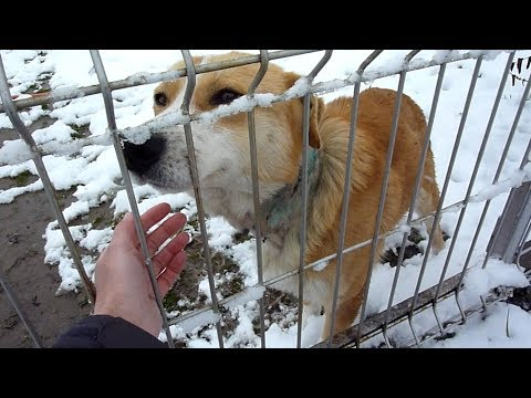 Rescue of a Scared Injured Homeless Dog on a Cold Day