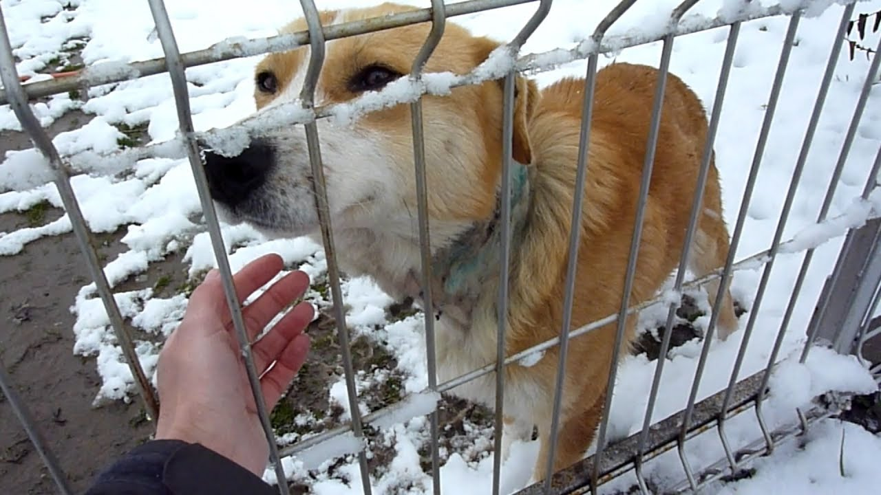 rescue-of-a-scared-injured-homeless-dog-on-a-cold-day