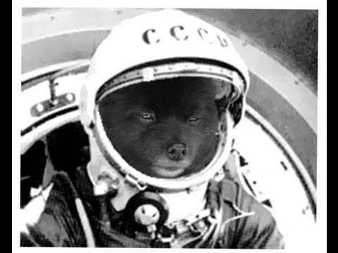 Soviet Space Pomeranians