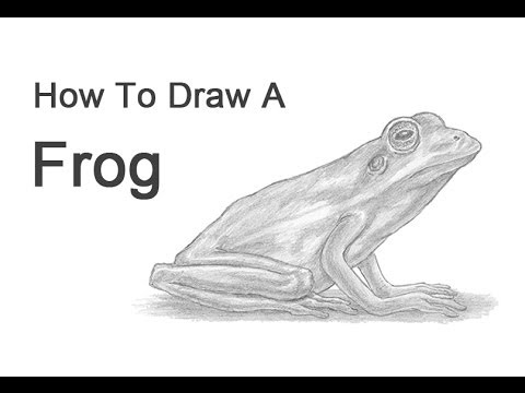 Realistic Tree Frog Drawings How to Draw a F...