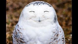 Самые забавные фотографии дикой природы  Сплошной позитив!