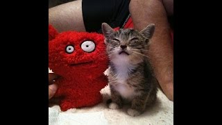 【一部閲覧注意】重度の感染症を患ってしまい、目を開けることができなかった子猫。とある一家の愛に救われて、光を取り戻す!