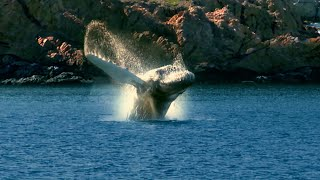 O Canada, Whale Songs in Newfoundland and Labrador