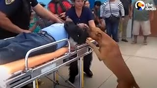 Dogs Jump Into Ambulance With Dad | The Dodo