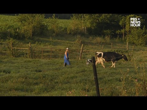 Hard times hit Virginia's dairy industry