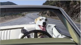 You should have a DOG   Funniest dog videos ever!
