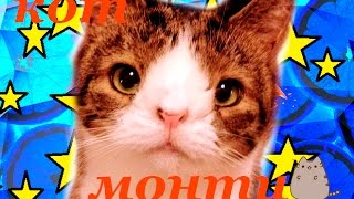 Кот с синдромом Дауна...