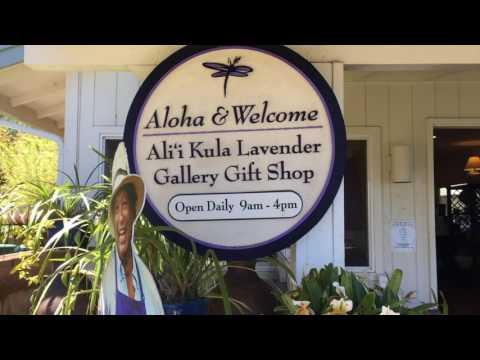 Aloha Archives || Ali