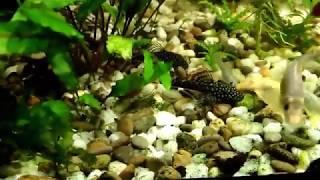 видео Sera корма для аквариумных рыб