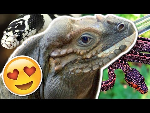 matchmaking python