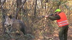 Hunting Serbia - Wild boar hunting | Lov na divlje svinje Đerdap - Golubac  | Caccia ai cinghiali
