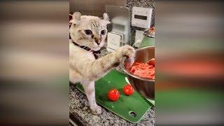 Приколы с животными 2019 #10 Смешные видео про котов и собак до слез 2019 Животные кошки собаки 2019