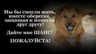 Клаус! Пес-инвалид ДОМА!