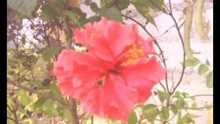 Tu Meri Adhuri Pyaas Pyaas  (HAI GUZARISH) FULL SONG a.r. rahman
