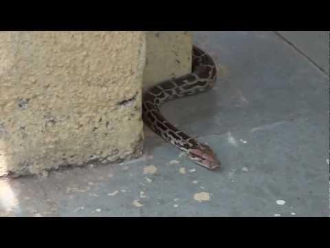Python in SGNP