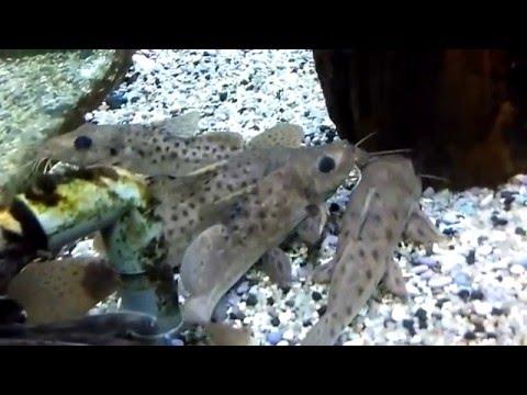 Liburan Seru di Taman Aquarium Air Tawar TMII