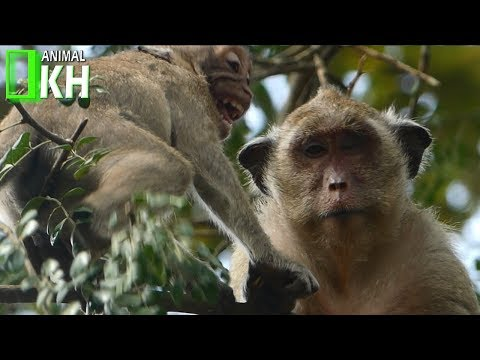 Thumbnail: Angry With Mum Make Baby Monkey Crying Very Loudly