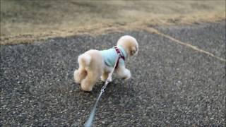 関連記事:http://bonpoodle.blog117.fc2.com/blog-entry-1949.html ハ...