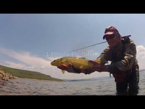 1 Minute Fly-fishing - Sterkfontein Dam Dry Fly Take