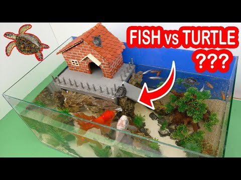 What Is Going On With Turtles And Fish In One Aquarium Build With Mini Bricks