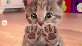 Маленький Котенок \ Уход За Домашними Животными - Играть Милый Котенок\ Мини-Игры Для Детей