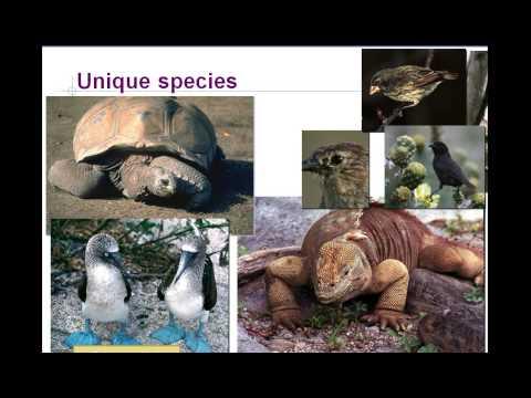 Evolution essay questions Ipgproje com Ap biology evolution essay questions
