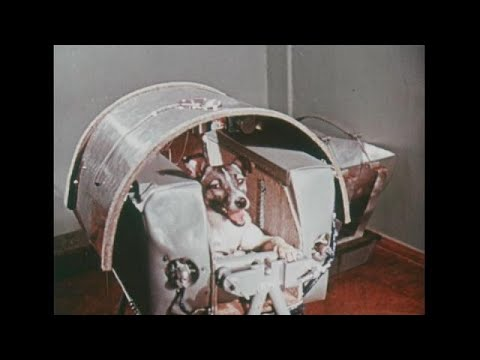 60 years on - Laika the dog in space