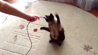 Кошка занимается боксом. Смотреть всем.