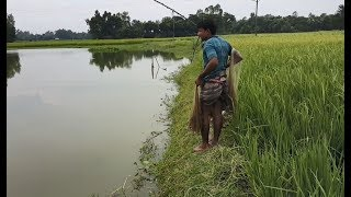 Best Net Fishing | Fish Hunting in village | Traditional Net fishing | Fishing by cast net
