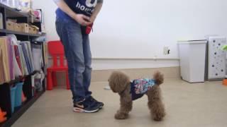 犬の幼稚園 アンシュちゃんとトレーニング