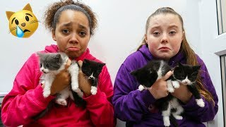 RESCUED KITTENS CHRISTMAS SURPRISE!!