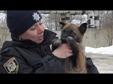 Поліція Луганщини: 11.02.2019_