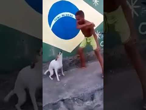 Dog dancing with boy hips don't lie