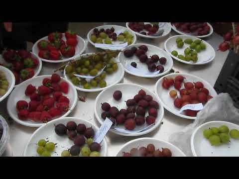 Дегустация сортов крыжовника 12. 07. 18г. на Комаровском рынке