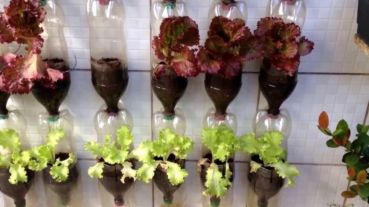Mundo das Plantas: Horta Vertical feita com Garrafas Pet ...