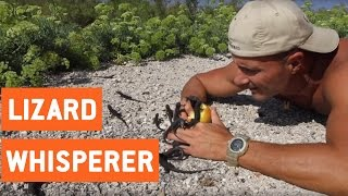 Lizards Crawl On Man's Hands | Lizard Whisperer