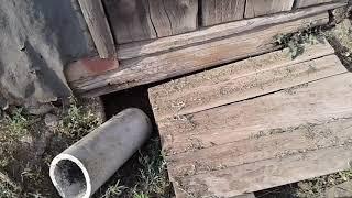 Алабай копает ямы во дворе... Как я поступаю в этих ситуациях