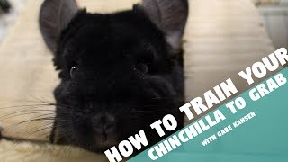 How to Train Your Chinchilla to Grab