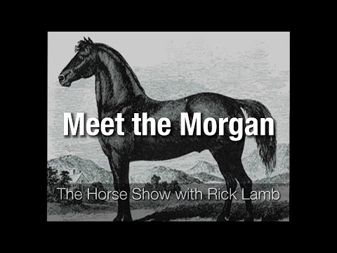 Meet the Morgan