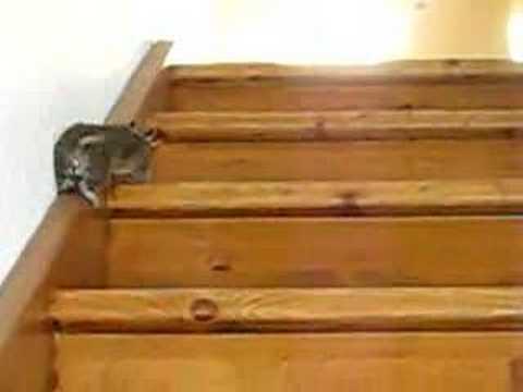 Octodon qui monte les escaliers youtube for Chaise qui monte les escaliers