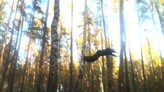 video 128 some exercises between the trees упражнения между деревьями(, 2016-10-17T14:34:07.000Z)