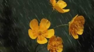Mehmet Emin Ay - Yağmur