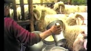 Vie des bergers en Ossau 1987