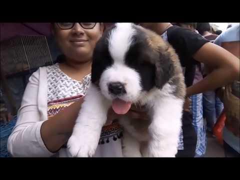 Explore The Cheapest, Nicest & Oldest Pet Market Of India l Galiff Street Dog Market Kolkata